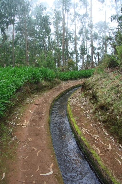 Alkumatkasta kuljettiin eukalyptusmetsikössä