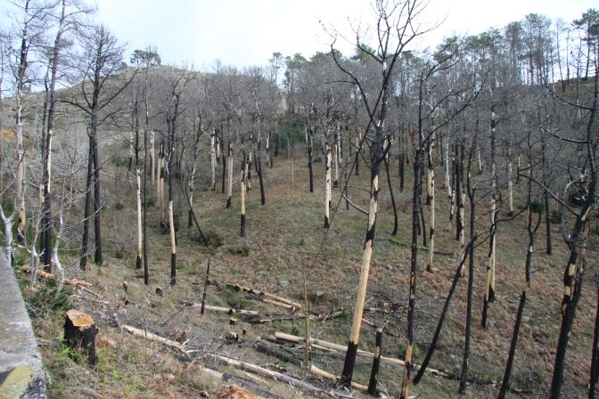 Matkalla ylös näimme taas metsäpalojen tuhoamaa maastoa.