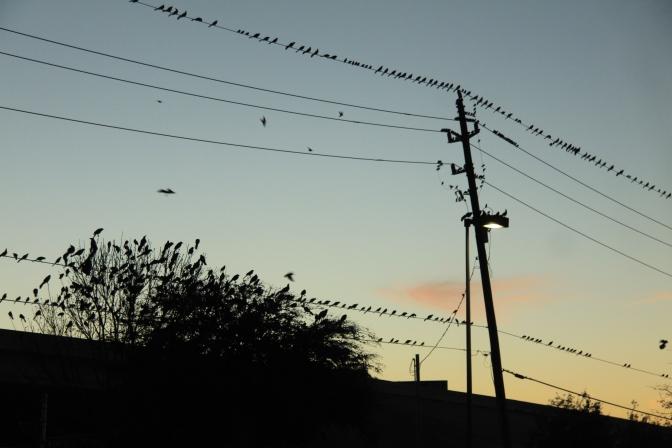 Illan pimetessä Hitchcockin linnut kokoontuu...