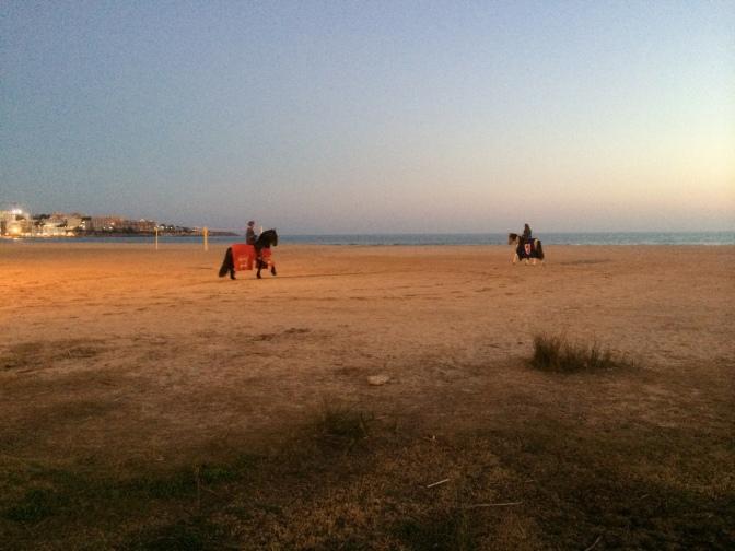Kulkueen hevoset jaloittelivat rannalla.