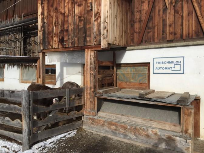 Tuoremaitoautomaatti sijaitsi nurkan takana. Kuvan sonninmullikat eivät liity suoranaisesti tuoremaidon tuottamiseen.