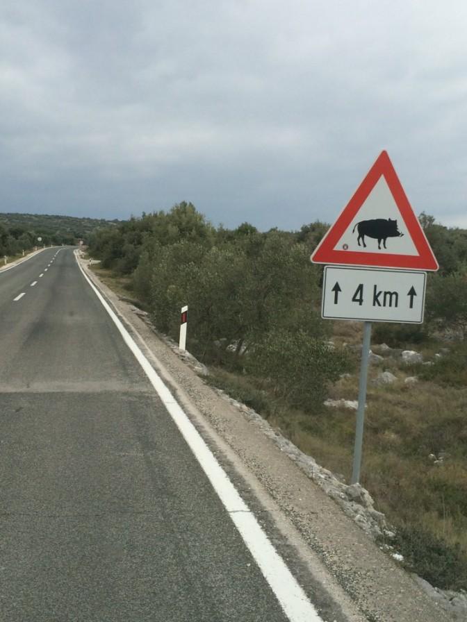 Tällainen varoitusmerkki oli muutaman kilometrin välein. Ei nähty itse villisikaa.