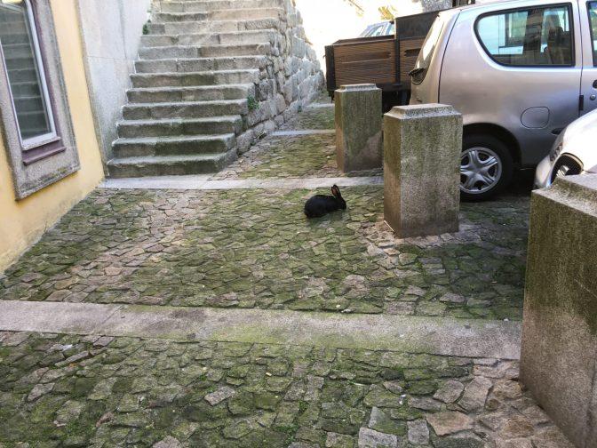 Enpä ole ikinä aikaisemmin törmännyt kesyyn kaniin missään kaupungissa. Siinä se pupelsi tyytyväisenä kivien välissä kasvavaa ruohoa :)