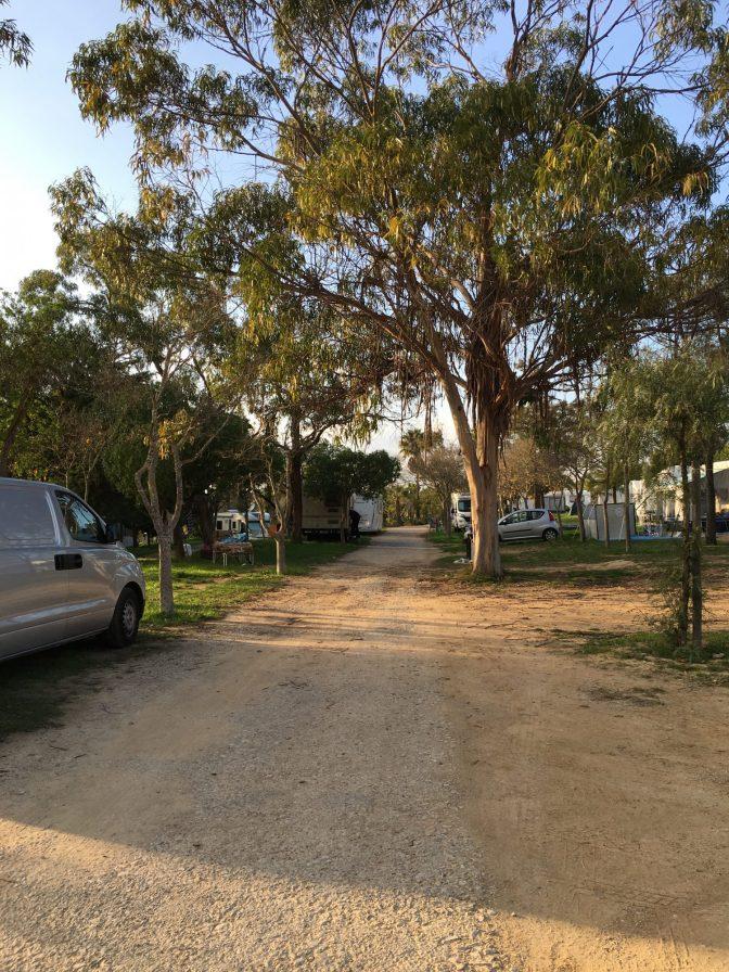 Isoja eucalyptuspuita. Camping Albufeira.