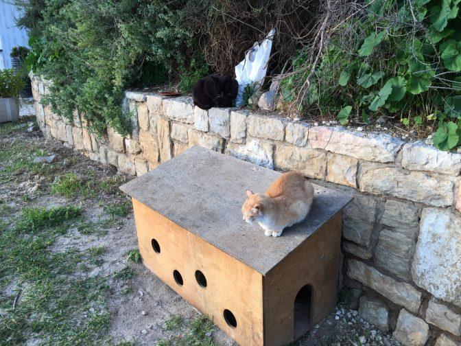 Kissojen koti. Sisällä oli ruokaa.