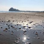 31.12.2019 Peñiscola. Rauhallista eloa ja rantakävelyä